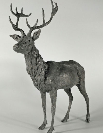 Stag 3/10
