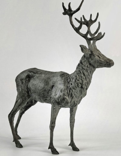 Stag 5/10, SOLD