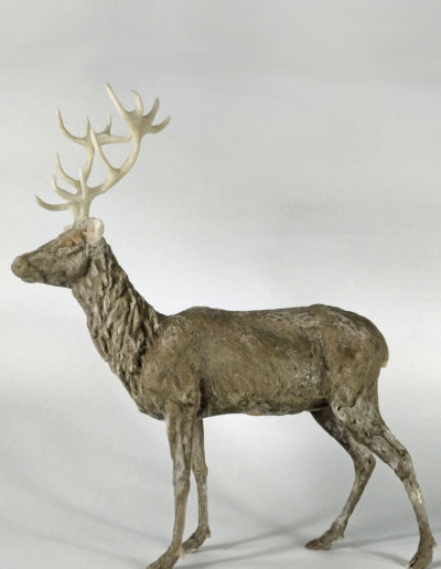 Stag 6/10, SOLD